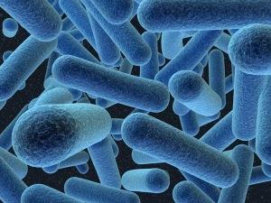gambar-bakteri