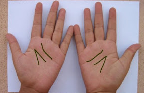 10_jari_jari_manusia_dan_telapak