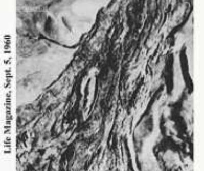foto_1949